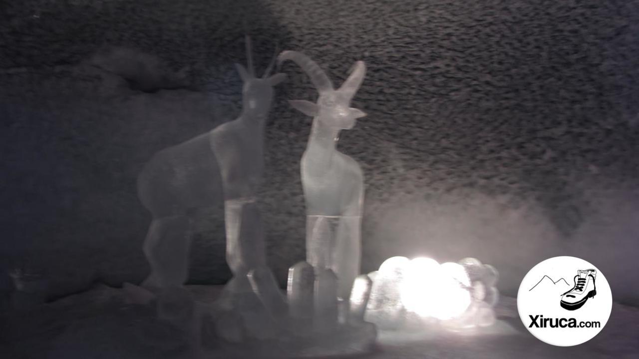 Rebeco e íbice de hielo