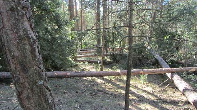 Gimkana árboles