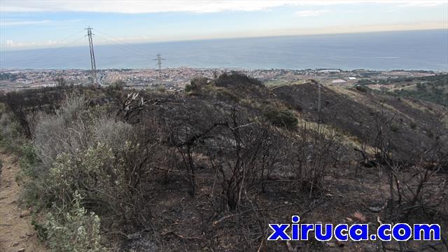 Zona deforestada por incendios