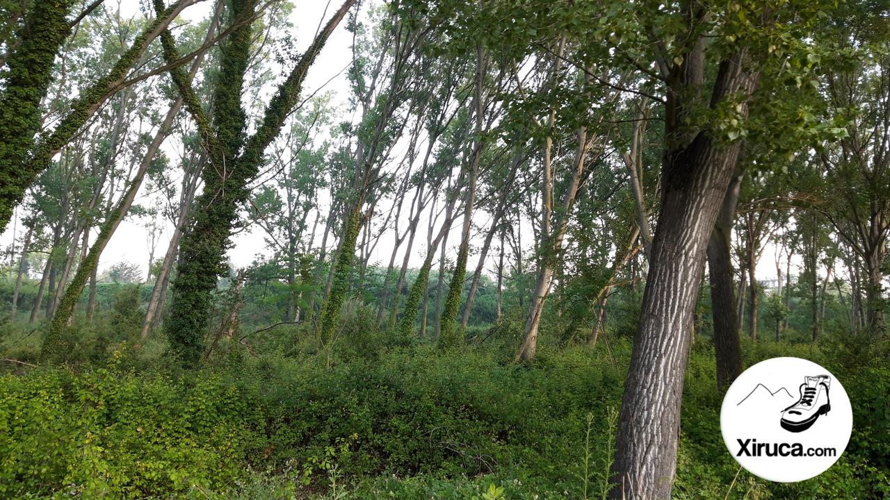 Bosques de La Llagosta
