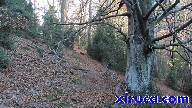 Bosque camino del Sobrepuny