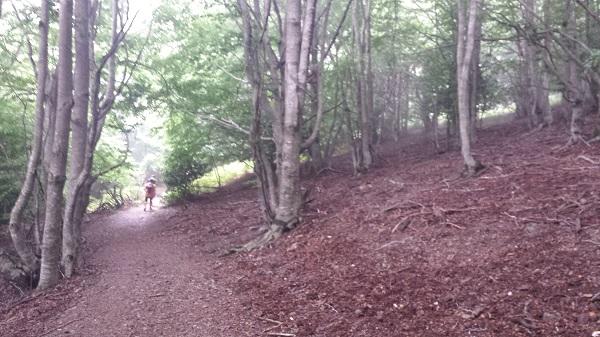 Bosque del Montseny