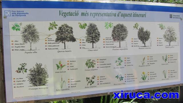 Vegetación dels Aiguamolls