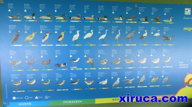Aves en Aiguamolls de l'Empordà