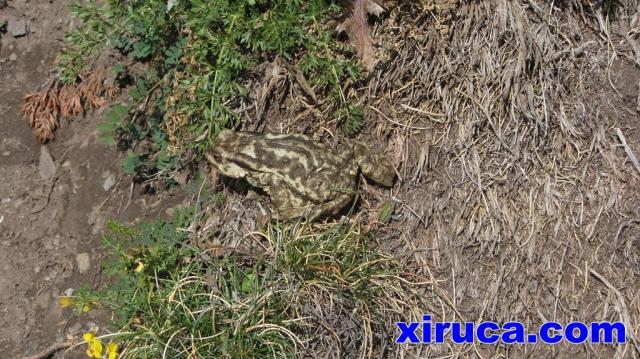 Una rana en el camino