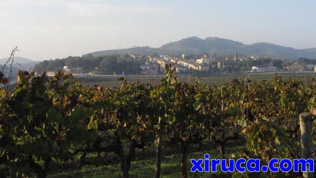 Viñas y Sant Miquel d'Olèrdola