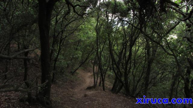 Bosques de Collserola