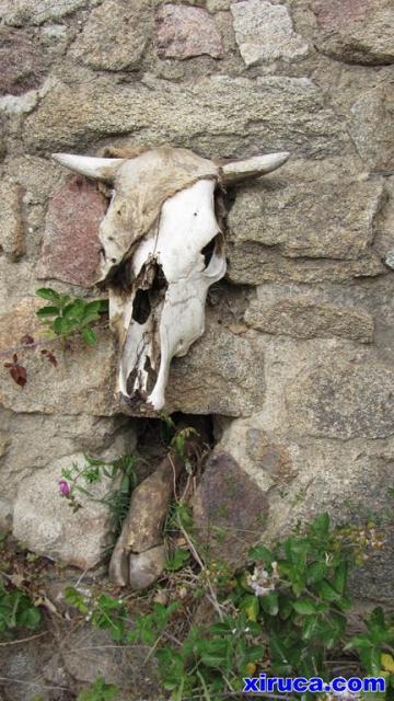 Huesos de vaca