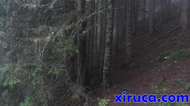 Bosque en Merlet